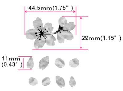 画像4: 桜